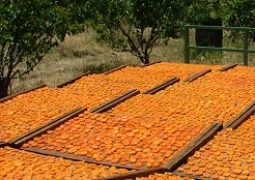 Sulfured dried apricot