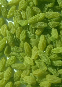The best Iran Kashmar Green raisin Producer