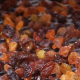 export Persian raisins